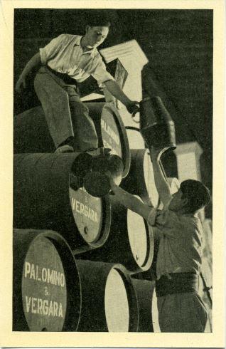 Palomino & Vergara