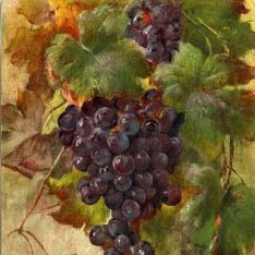 Racimo uva tinta