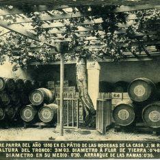 Bodegas de la Casa J.M. Rivero