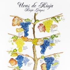 Cartel informativo de las diferentes variedades de uva de Rioja
