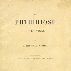 La phthiriose de la vigne