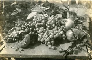 Racimos de uva y frutas
